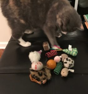 cat with cat toys
